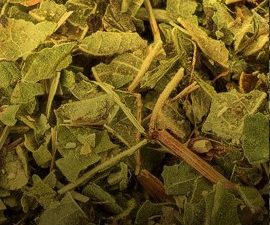 Herbal-tea_1